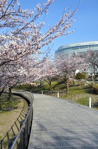 新潟市民芸術文化会館と桜の写真素材 [FYI01628335]