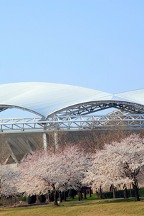 サッカースタジアムと桜並木の写真素材 [FYI01628374]