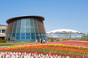 新潟市食育・花育センターのチューリップ畑の写真素材 [FYI01628428]
