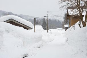 雪の中の民家と道の写真素材 [FYI01628484]