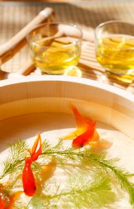 桶の中の金魚の写真素材 [FYI01628492]
