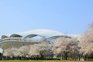 サッカースタジアムと桜並木の写真素材 [FYI01628575]