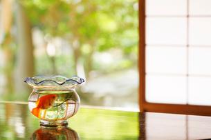 テーブルの上の金魚鉢の写真素材 [FYI01628592]