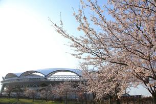 桜とサッカースタジアムの写真素材 [FYI01628598]