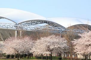 サッカースタジアムと桜並木の写真素材 [FYI01628623]