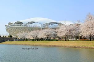 サッカースタジアムと桜並木の写真素材 [FYI01628669]