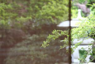 和室より庭園の写真素材 [FYI01628705]