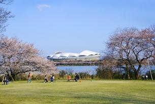 デンカビッグスワンスタジアムと桜の写真素材 [FYI01629323]