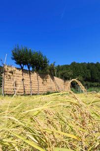 ハザ掛けのある田園風景の写真素材 [FYI01629362]