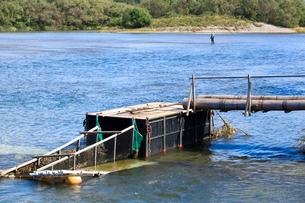 三面川の鮭漁の仕掛けの写真素材 [FYI01629401]