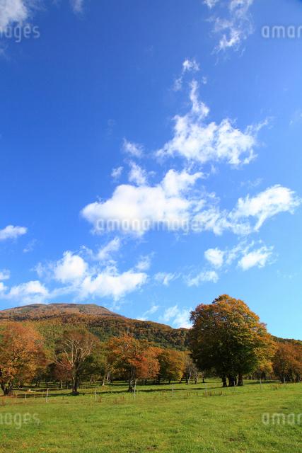秋の笹ヶ峰高原の写真素材 [FYI01629430]