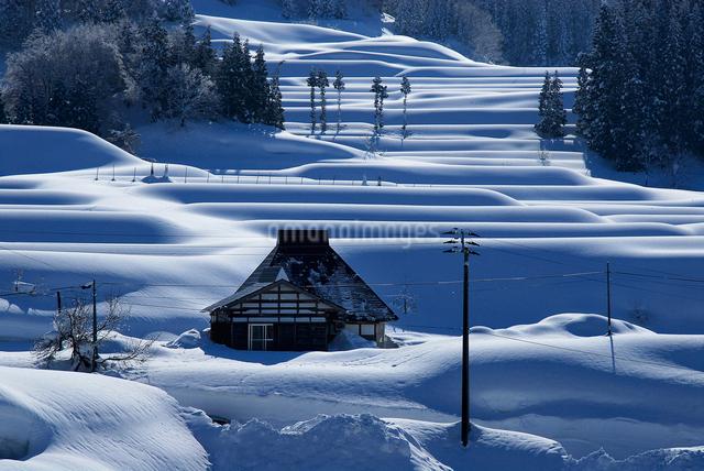 豪雪地の棚田の写真素材 [FYI01629455]