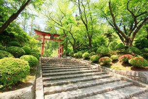 弥彦神社桜苑の鳥居の写真素材 [FYI01629502]