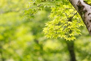 新緑イメージの写真素材 [FYI01629532]