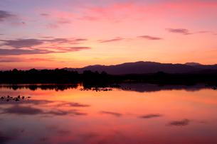 福島潟の朝の写真素材 [FYI01629588]