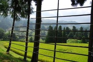 ハサ木の間から見る秋の田園風景の写真素材 [FYI01629597]