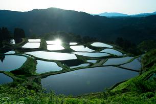 山古志の棚田の朝景の写真素材 [FYI01629607]