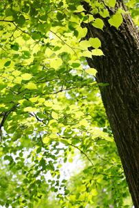 新緑イメージの写真素材 [FYI01629642]