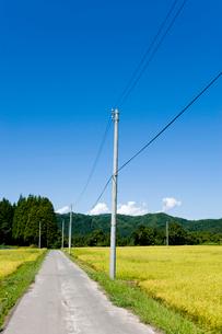 秋の田園風景と農道の写真素材 [FYI01629649]