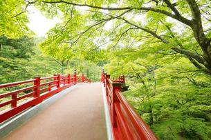 新緑の弥彦公園の観月橋の写真素材 [FYI01629657]