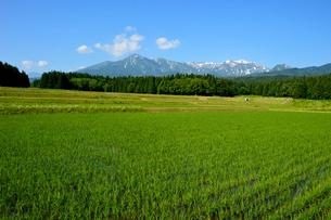 田園風景と山並みの写真素材 [FYI01629694]