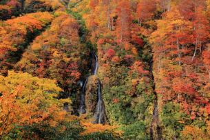 秋のそうめん滝の写真素材 [FYI01629696]