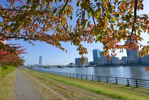 信濃川左岸のやすらぎ堤よりマンション群を望むの写真素材 [FYI01629712]