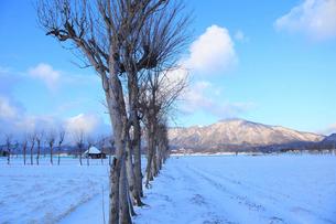 雪の弥彦山とハサ木並木の写真素材 [FYI01629713]