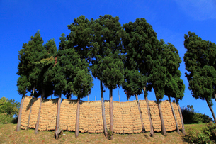 ハサ掛け風景の写真素材 [FYI01629752]