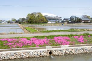 デンカビッグスワンスタジアムと水田と芝桜の写真素材 [FYI01629757]