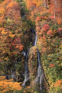 秋のそうめん滝の写真素材 [FYI01629759]