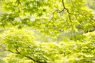 新緑イメージの写真素材 [FYI01629779]