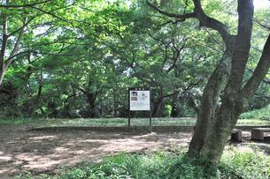 佐倉城銅櫓跡の写真素材 [FYI01629870]