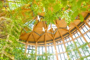 新潟市食育・花育センター内のアトリウムの写真素材 [FYI01629881]