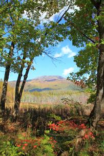 夢見平より望む秋の三田原山の写真素材 [FYI01629909]