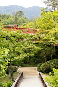 新緑の弥彦公園の写真素材 [FYI01629927]