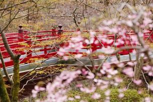 弥彦公園もみじ谷の観月橋の写真素材 [FYI01629931]