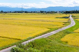 秋の田園風景と農道の写真素材 [FYI01629945]
