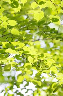 新緑イメージの写真素材 [FYI01629983]