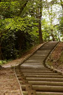 新緑の弥彦公園の写真素材 [FYI01629991]