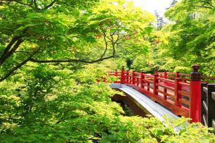 弥彦公園の観月橋の写真素材 [FYI01630042]