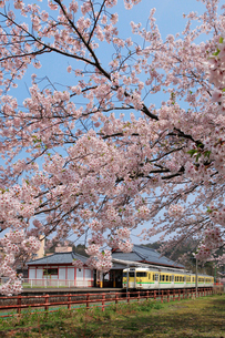 電車と桜の写真素材 [FYI01630054]
