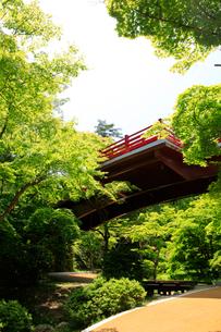 弥彦公園の観月橋の写真素材 [FYI01630065]