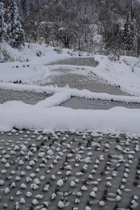 雪の棚田の写真素材 [FYI01630066]