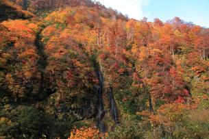 秋のそうめん滝の写真素材 [FYI01630085]