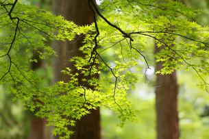 新緑イメージの写真素材 [FYI01630127]
