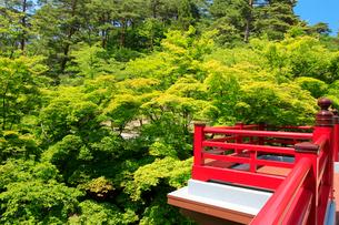 弥彦公園の観月橋の写真素材 [FYI01630145]