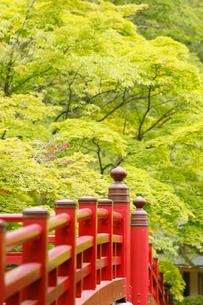 新緑の弥彦公園の観月橋の写真素材 [FYI01630161]