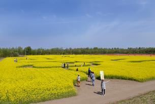 長池憩いの森公園内の菜の花ゾーンの写真素材 [FYI01630164]