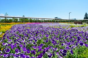 いくとぴあ食花のキラキラガーデンの写真素材 [FYI01630187]